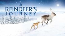 New English Film: A Reindeer's Journey – Official Trailer HD